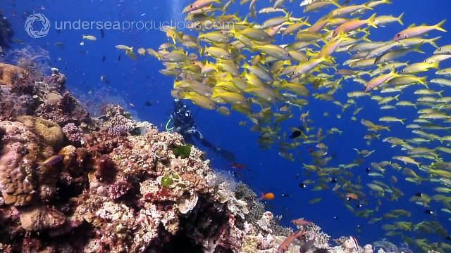 Diving the Ribbon Reefs on Australia's Great Barrier Reef