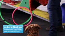 Easy Tricks to Teach   Dog Tricks