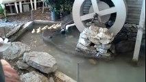 Yavru Ördeklerin Su Kaydırağı Keyfi..