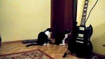 Кошка просит прощения   Ржу не могу   Cat tries to apologize
