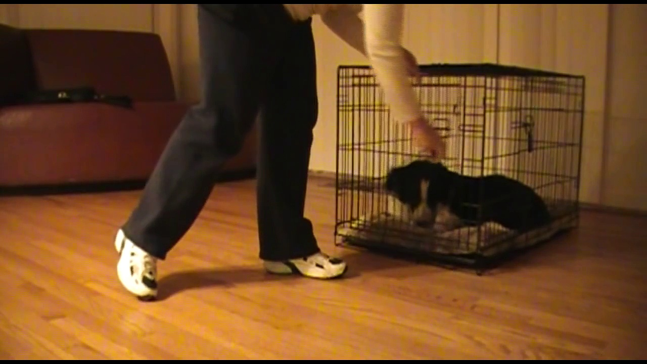 Shaping your dog to love his crate – Clicker Training Tutorial