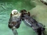 Otters Holding Hands - Music Video
