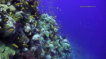 The Red Sea: A dive into paradise