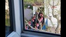 Akhisar Tutuklu Sanıkları Dha Görüntüledi