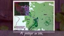 Geografía - Unidad de repaso - Las áreas naturales protegidas