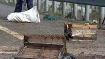 Millions of bees swarm on Chinese motorway after crash