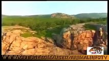 Animal Planet   Discovery Channel   Wild Life Documentary 2015   National Geographic Wildl