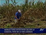 Desbordamiento de río Las Juntas afectó a cultivos en Los Ríos