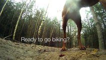 Downhill mountain biking at The Lookout (Swinley Forest) with Amber the Downhill Dog filmed on GoPro