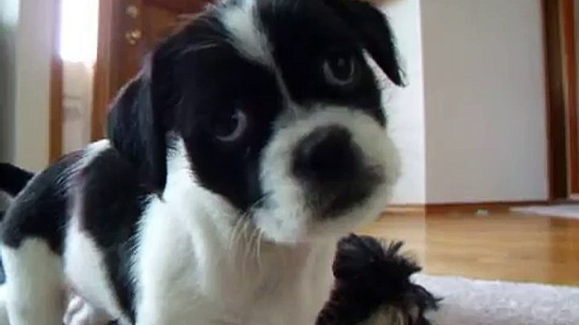 confused puppy