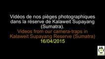 AMAZING Videos from our Camera-Traps / Vidéos EXCEPTIONNELLES de nos piéges photographiques