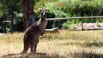 True Facts About Marsupials