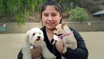 Coco and Lola | Dog Will Be Dogs