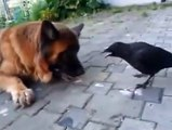 Playing Ball- A dog, a crow, and a ping pong ball