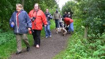 Scottish Basset Hound Walk At Forfar Loch