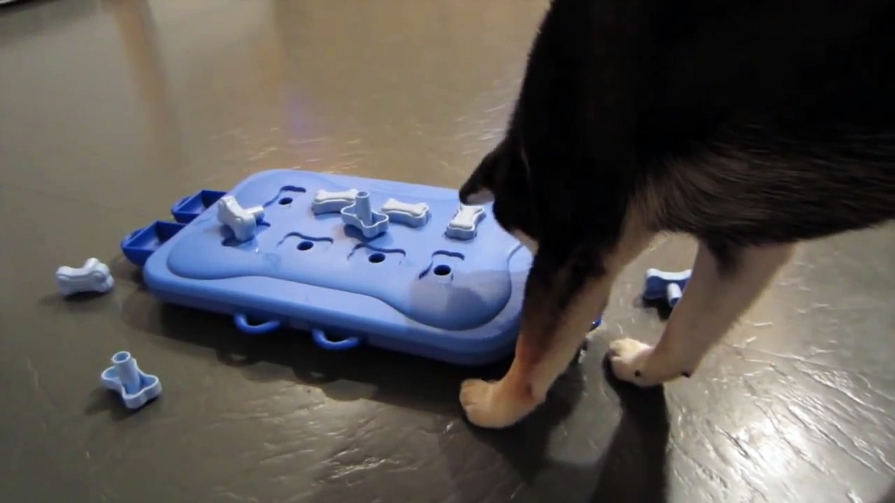 Shiba Inu Saki: Dog Toys – Nina Ottosson' Dog Casino Puzzle