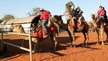 Uluru Camel Tours Offers Camel Rides – A Unique Way to Experience Uluru