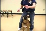 Dog Tricks : Peekaboo Dog Trick