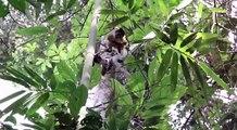 Flora & Fauna Amazónica Peruana, Iquitos