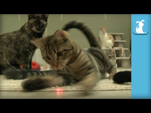 Kittens FREAK OUT for Laser Pointer! It's their FIRST TIME! – Kitten Love