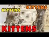 Kittens, Kittens and Kittens! Episode 6