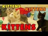 Kittens, Kittens and Kittens - Episode 1