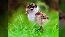 Top des bébés animaux les plus mignons