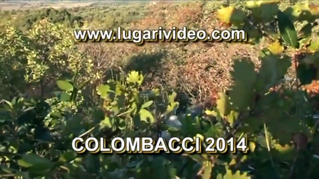 Shack Hunting to Pigeons 14 Lugari Video Trailer Chasse pigeon Caccia Colombacci