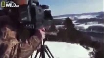 American Bald Eagle - Flying, Hunting (Nature Wildlife Documentary) - Animals Planet