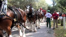 Super Bowl's Baby Clydesdale: A Budweiser Story