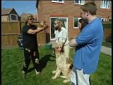 How to stop your dog jumping - Barking Mad - BBC Pets