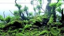 Adding Driftwood To Your Aquarium