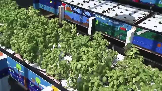 Introduction To Aquaponics (Concepts and Methods)