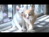 Kittens Grooming Kittens Grooming Kittens