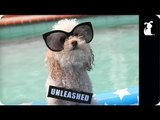 Miley Cyrus - We Can't Stop (PET PARODY) - Maltey Cyrus - We Can Bark