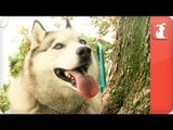 Pet Talk - Feeding Your Pet