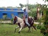 Aprende a entrenar caballos! Curso para entrenar caballos! Visita:  www.domacaballosaltaescuela.com
