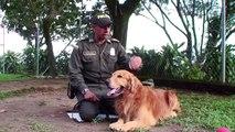 Más que guías, son humanos que aman a sus perros- Guía Caninos Policía