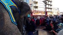 Boulogne : les éléphants du cirque Gruss prennent leur petit dej' en ville