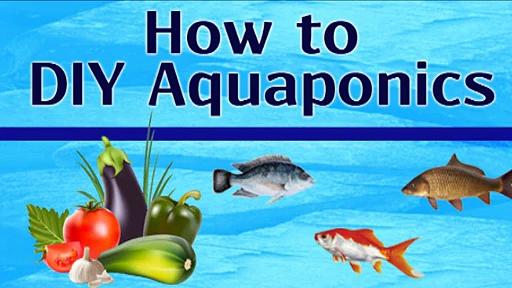 How To DIY Aquaponics indoor Gardening