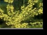 """Om Mani Padme Hum"" - Buddhist Meditation Video"