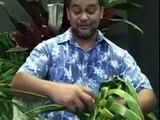 (2of3)  The Kama Family Style of Basket Weaving Demonstation  Hilo Hawaii 2008