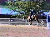 For sale Hunter under saddle paint,quarter horse stallion
