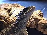 Iguana Vlissingen