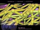 Extracellular Matrix : Extracell Matrix : Matrix Extracelular : Matriz Extracelular