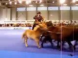 European Dog Show 2008 - Mudi Show