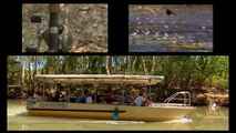 Australia's amazing wetlands, World Wetlands Day 2012