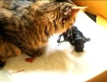Роды кошки, кошка рожает , котята, cat giving birth