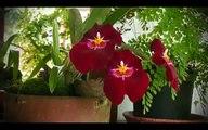 CALI Vivela, Video promocional de turismo de Cali, el Valle del Cauca y la feria de Cali