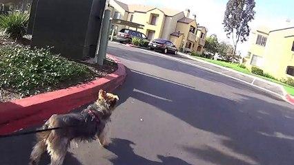 Ollie Day 2 / 12lb Terrier Pulls Skateboarder